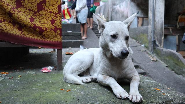 朝市にいた犬